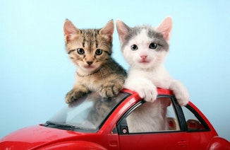 Kittens in a car