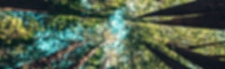 Blurry Forest Image
