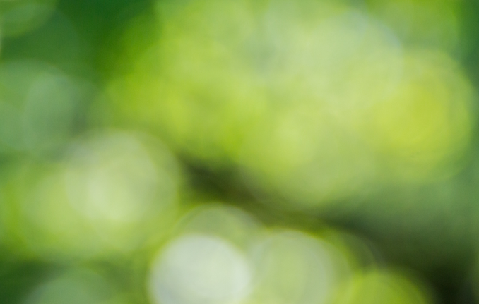 Blurry green photo