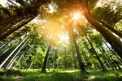 Display of forest magestic capacity in fighting climate change